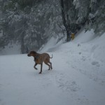 Lucky Dog Running Through The Snow
