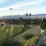 Pampas Grass With The View of The San Bernardino Mountains