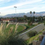 Pampas Grass And The View of The San Bernardino Mountains