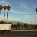 Three Palm Trees And the Mountains