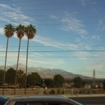 Three Tall Palms With the View of San Gorgonio Mountains