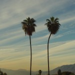 Two Palm Trees In Southern California